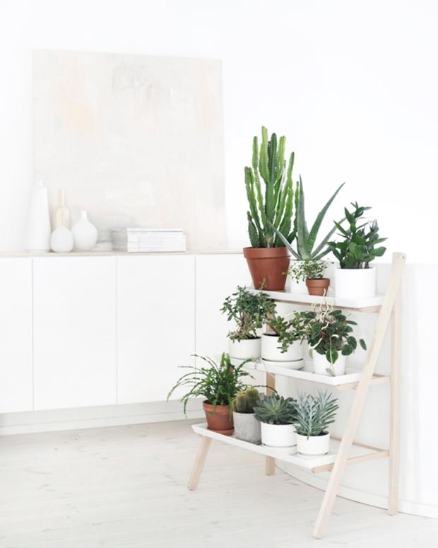 plant, herb, kruiden, interieur, eigenhandig