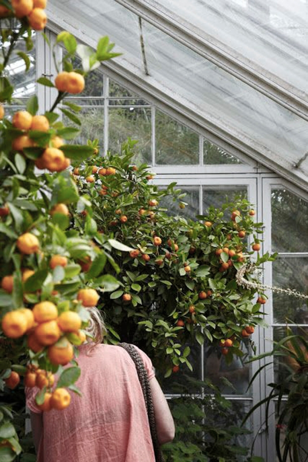 eigenhandig, botanic, greenhouse, moestuintje